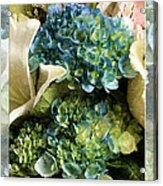 Blue Hydrangeas Painterly Acrylic Print