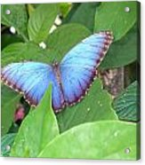 Blue In The Leaves Acrylic Print