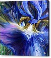 Blue Iris Acrylic Print by Lynette Yencho