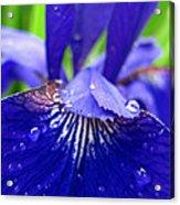 Blue Iris Rain Drops Acrylic Print