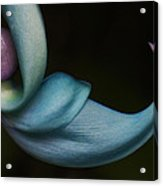 Blue Jade 1 Acrylic Print