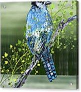 Blue Jay Mixed Media Acrylic Print