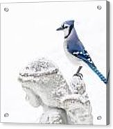 Blue Jay On An Angel Acrylic Print