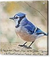 Blue Jay With Verse Acrylic Print