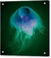 Blue Jelly Series 4 Acrylic Print