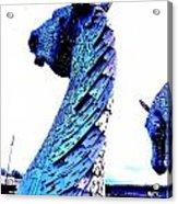 Blue Kelpie Acrylic Print