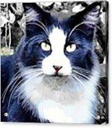 Blue Kitty Two Acrylic Print