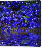 Blue Lobelia Acrylic Print