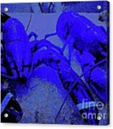 Blue Lobsters 21 Acrylic Print