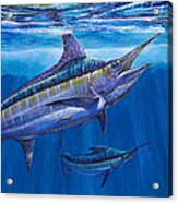 Blue Marlin Bite Off001 Acrylic Print by Carey Chen
