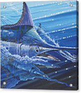 Blue Marlin Strike Off0053 Acrylic Print by Carey Chen