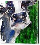 Blue Moo Acrylic Print