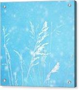 Blue Nature Acrylic Print