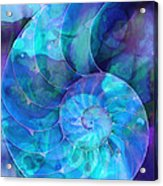 Blue Nautilus Shell By Sharon Cummings Acrylic Print