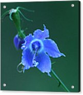 Blue On Green Acrylic Print