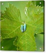 Blue On Green Acrylic Print by Fraida Gutovich