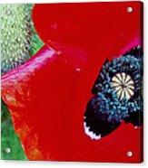 Blue Opium Acrylic Print