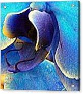 Blue Orchid Macro Acrylic Print