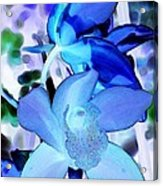 Blue Orchids Acrylic Print by Kathleen Struckle