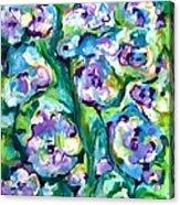 Blue Pansies Acrylic Print