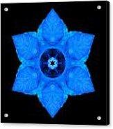Blue Pansy II Flower Mandala Acrylic Print by David J Bookbinder