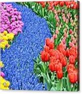Blue Path Of Flowers Acrylic Print