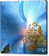 Blue Poppy Acrylic Print