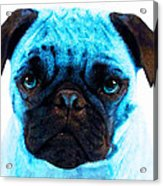 Blue - Pug Pop Art By Sharon Cummings Acrylic Print