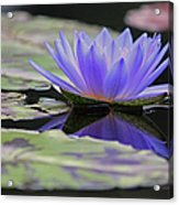 Blue Purple Dreams Acrylic Print