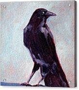 Blue Raven Acrylic Print