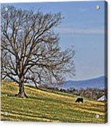 Blue Ridge Farm Acrylic Print