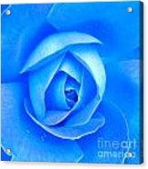 Blue Rose Macro Shot Acrylic Print