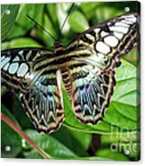 Blue Sea Butterfly Acrylic Print
