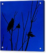 Blue Silhouette Acrylic Print by Julie Cameron