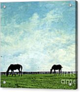 Blue Skies And Blue Grass Acrylic Print