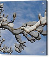 Blue Skies In Winter Acrylic Print by Bill Cannon