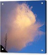 Blue Sky Sunset And Agave Acrylic Print