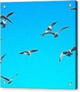 Blue Sky With Gulls Acrylic Print