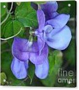 Blue Snail Vine Twins Acrylic Print
