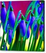 Blue Snowdrops Acrylic Print
