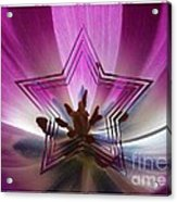Blue Star Tulip Design Acrylic Print