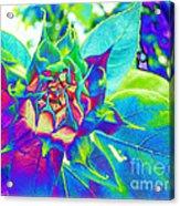 Blue Sunflower Acrylic Print