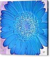Blue Surprise Acrylic Print