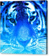 Blue Tiger Acrylic Print