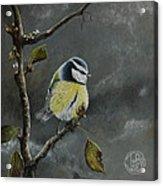 Blue Tit Near Winter Acrylic Print