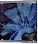 Blue Too Acrylic Print