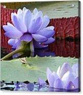 Blue Tranquillity Acrylic Print