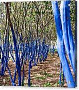 Blue Trees In Nature Acrylic Print