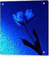 Blue Tulip Acrylic Print