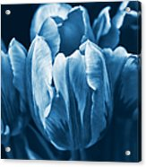 Blue Tulip Flowers Acrylic Print